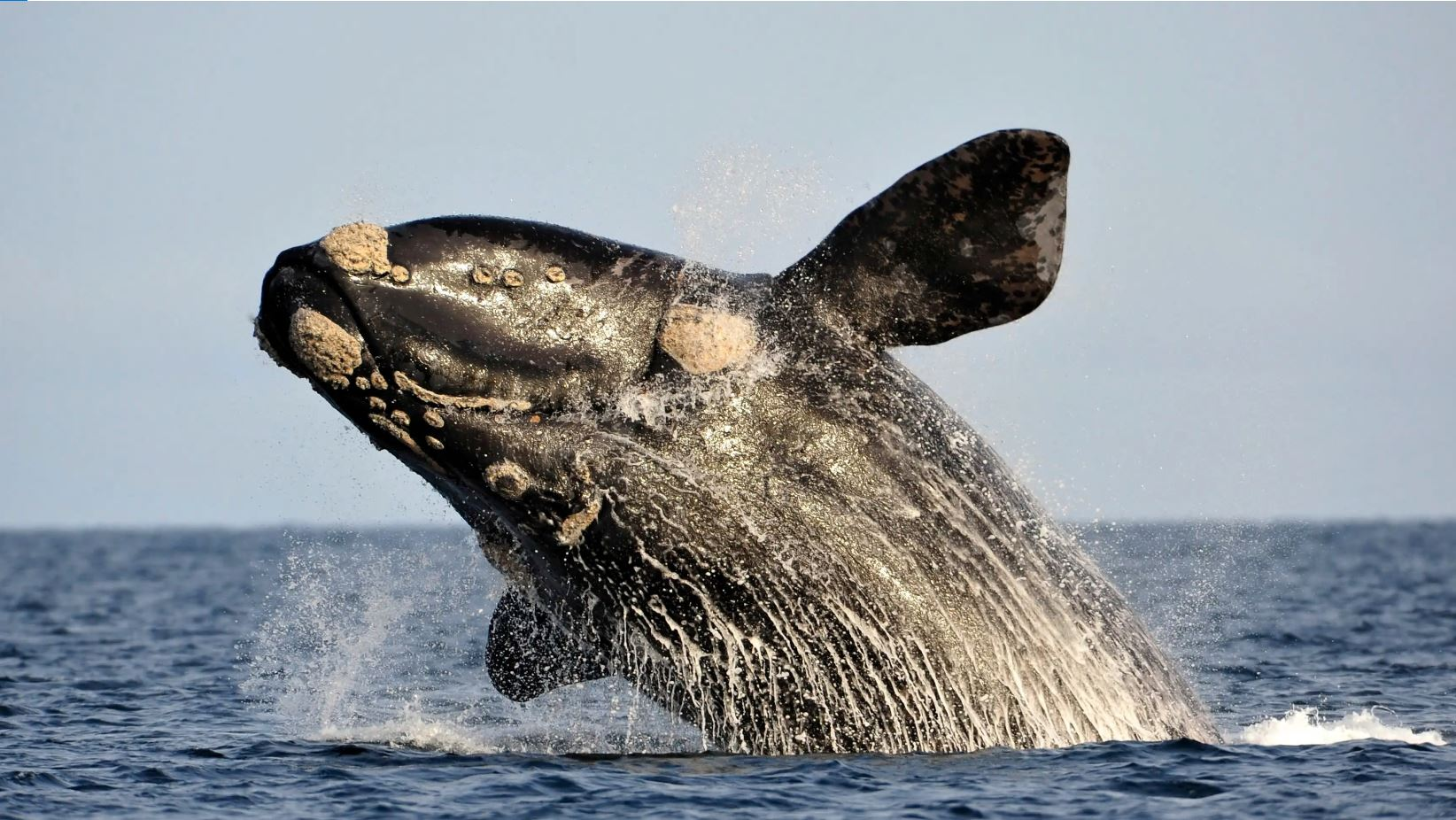 Nikkei Asian Review whales